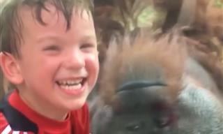 Zoo Animals Can Be Real Bullies - Funny!
