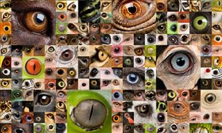 Can You Recognize These Animals Only By Their Eyes?