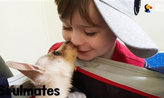 The Pure Bond Between a Boy and Baby Kangaroo