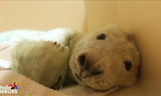 They Saved This Baby Seal's Life