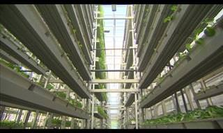 Singapore's Vertical Farming!