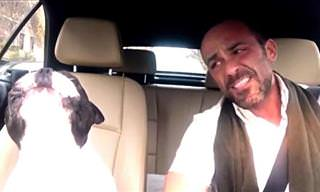 Watch Owner and Dog Sing Diamonds