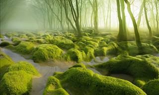 20 Incredible Forests