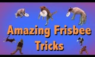 The 4 Legged Tricks You've Never Seen Before!