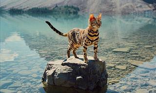 The World's Most Adventurous Cat
