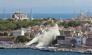 What Is This Giant Cat Doing Here? - 9 Hilarious Images