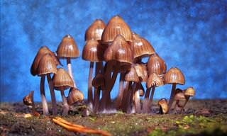 Magic Mushrooms Could Sooth Depression Symptoms