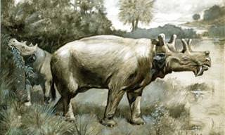 The Strangest and Most Bizarre Extinct Beasts