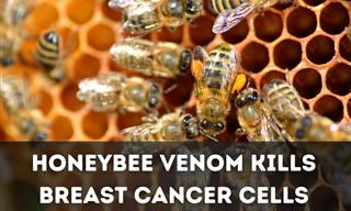 The Key to Treating Breast Cancer Could Be Hidden In Honeybees