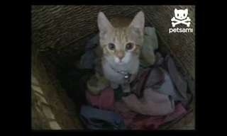 The Cat That Helps With the Laundry - Adorable!