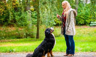Training Your Dog? Do it the Right Way with These 30 Tips!