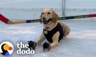 So Cute - This Dog Is Obsessed With Ice Skating!