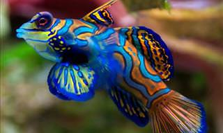 The World's Most Beautiful and Colorful Fish