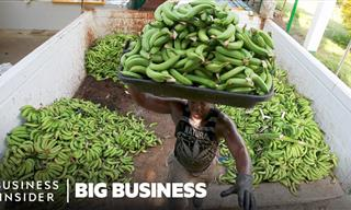 Are Bananas On the Verge of Extinction?