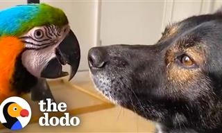 This Dog & Parrot Have Formed the Most Unusual Friendship