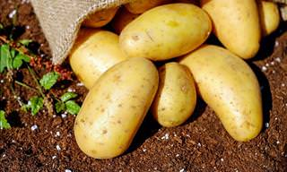 15 Uses of Potatoes Besides Eating Them