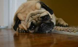 Ever Wondered Why Dogs Look Sad? Here's Why...