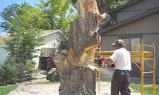 You Won't Believe What This Man Did With His Tree Stump