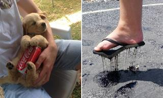 How to Cope With a Massive Heatwave - Funny Pictures!