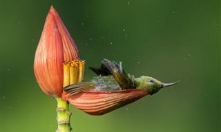 Admire the Winners of the 2021 Bird Photographer of the Year Contest