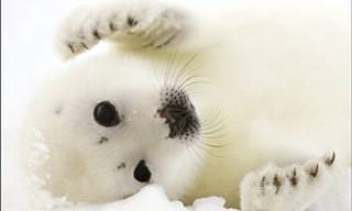 11 Adorable Polar Animals that Will Warm Your Heart