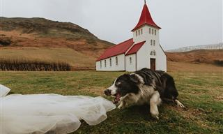 The CUTEST Contest: the Best Dog in a Wedding Photo (2021)
