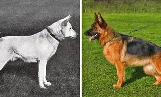 Dog Breeds Have Changed Over the past 100 years