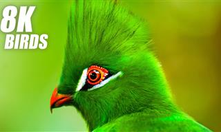 Enjoy This Collection of Breathtaking Colorful Birds in HD