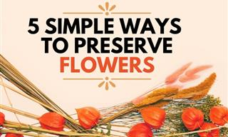 How to Preserve Flower Bouquets: 5 Simple Ways