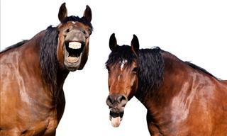 Joke: The Talking Horses