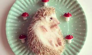 The Adorable Adventures of Darcy the Hedgehog!