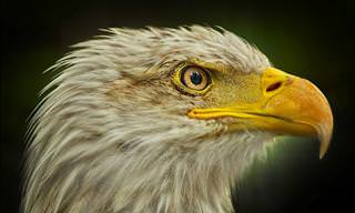 25 Eagle Facts That Will Knock You Over with a Feather
