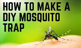 How to Make a DIY Bottle Mosquito Trap