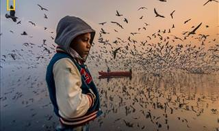11 National Geographic Photography Winners