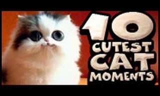 The Top Ten Cutest Cat Moments!