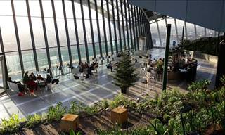 The Sky Garden - London's Tallest Botanical Garden
