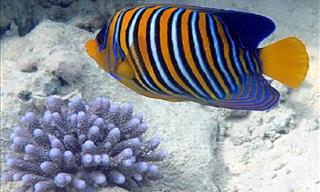 10 Colorful Marine Fish You Should Add to Your Aquarium!
