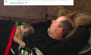 20 Pictures of People Who Claimed They Didn't Want Pets