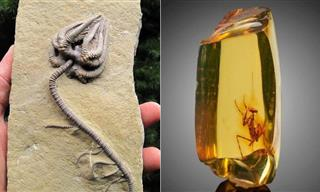 17 Well-Preserved Fossils Reveal the Glory of Nature