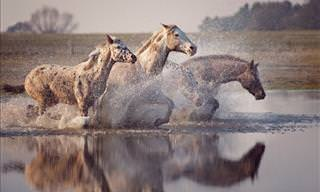Wiebke Haas's Amazing Horse Photography