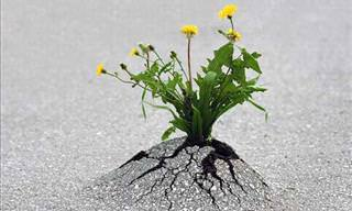 Life Always Finds a Way to Thrive...