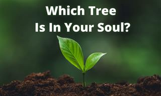 Test Yourself: Which Tree Are You Most Like?