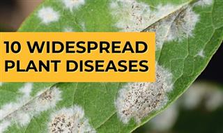 How to Identify and Manage 10 Common Plant Diseases
