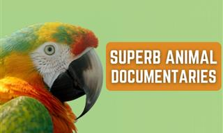 10 Spectacular Animal Documentaries You've Got to See!