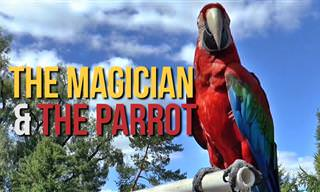 The Magician and the Parrot