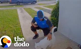 This Cat Loves Greeting Delivery Men!