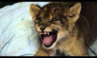 Roar Simba Roar - Adorable!