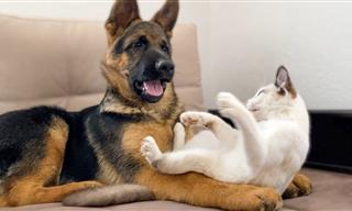 Cute Corner: Puppy vs. Kitten!