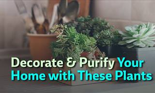 7 Plants That'll Purify Your Home