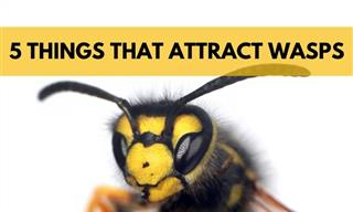 5 Ways You Could Be Unwittingly Attracting Wasps